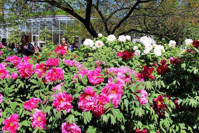 Brooklyn Botanic Garden Spring (13)