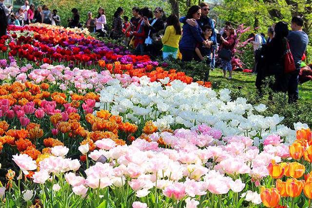 Brooklyn Botanic Garden Spring (2)
