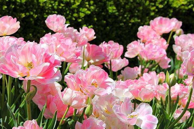 Brooklyn Botanic Garden Spring (9)