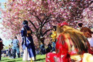brooklyn botanic garden sakura matsuri (1)