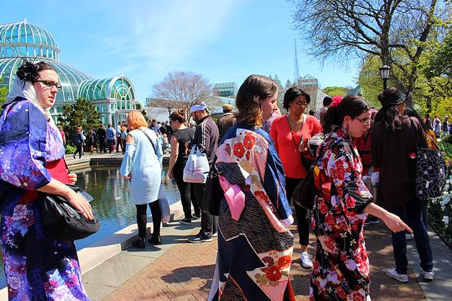 brooklyn botanic garden sakura matsuri (14)