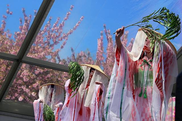 brooklyn botanic garden sakura matsuri (21)