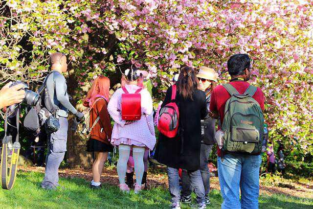 brooklyn botanic garden sakura matsuri (5)