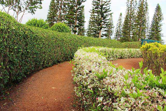 Dole Plantation (13)