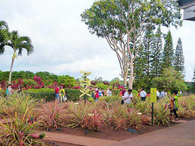 Dole Plantation (3)