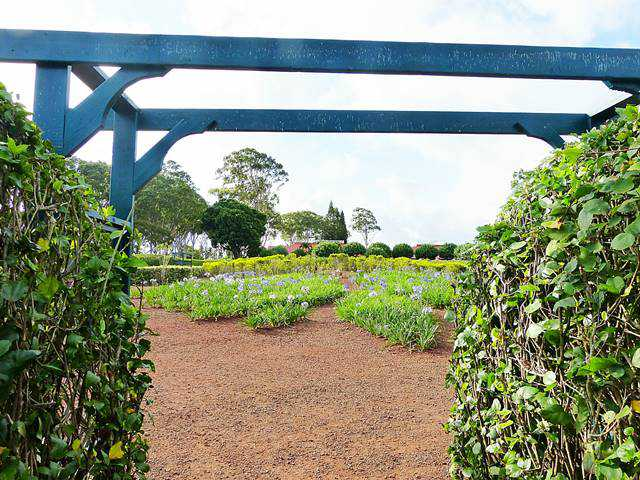 Dole Plantation (4)