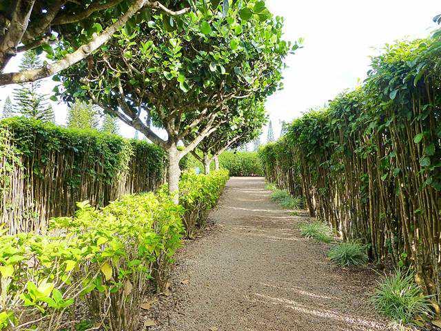 Dole Plantation (5)