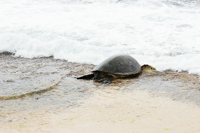 Hawaii Beach (16)