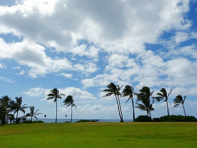 Hawaii Beach (6)