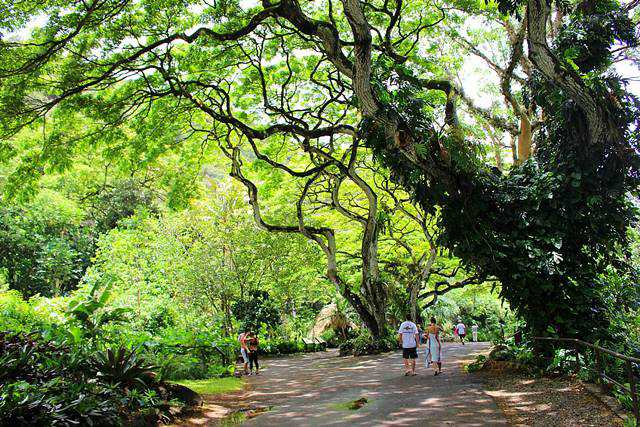 Waimea Valley (10)