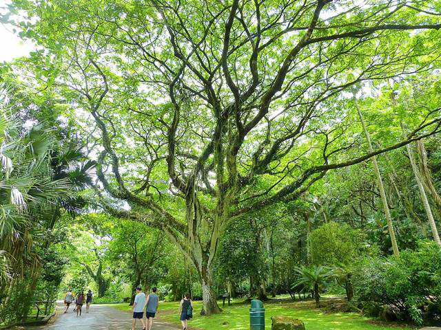 Waimea Valley (15)