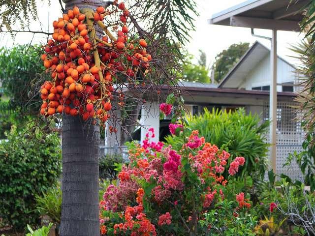 Helena Hawaiian Foods (5)
