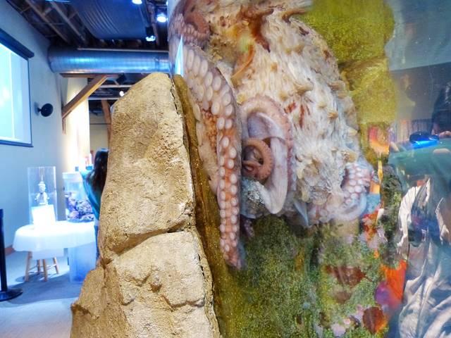 Seattle Aquarium (10)