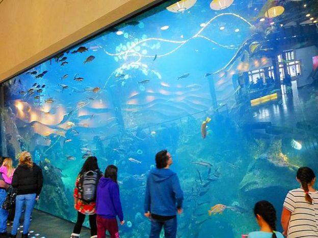 Seattle Aquarium (2)