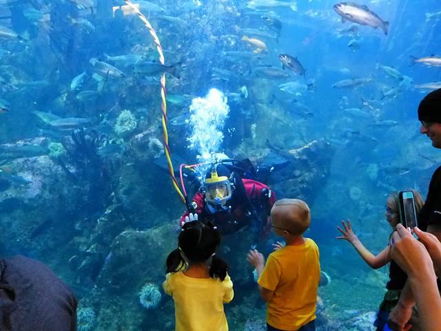 Seattle Aquarium (3)