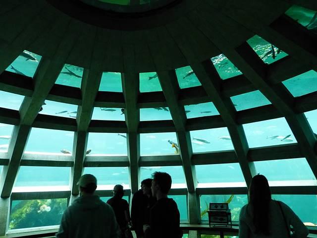Seattle Aquarium (6)