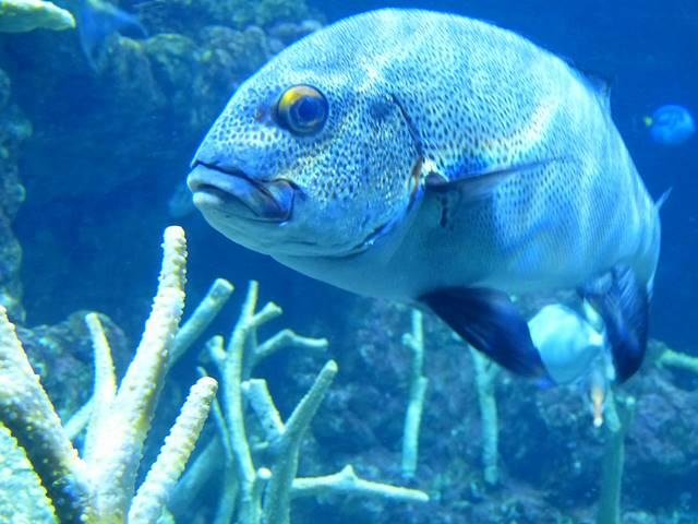 Seattle Aquarium (8)