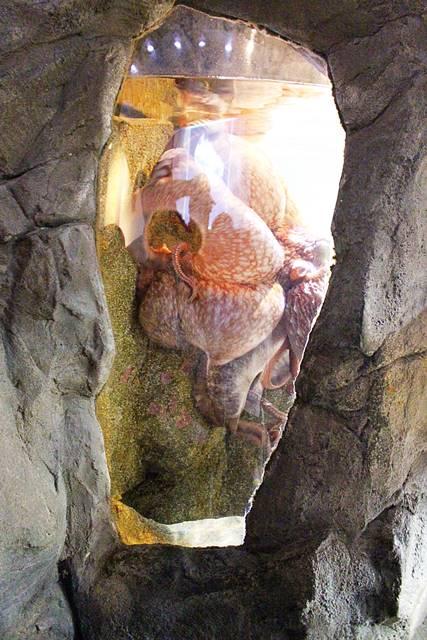 Seattle Aquarium (9)