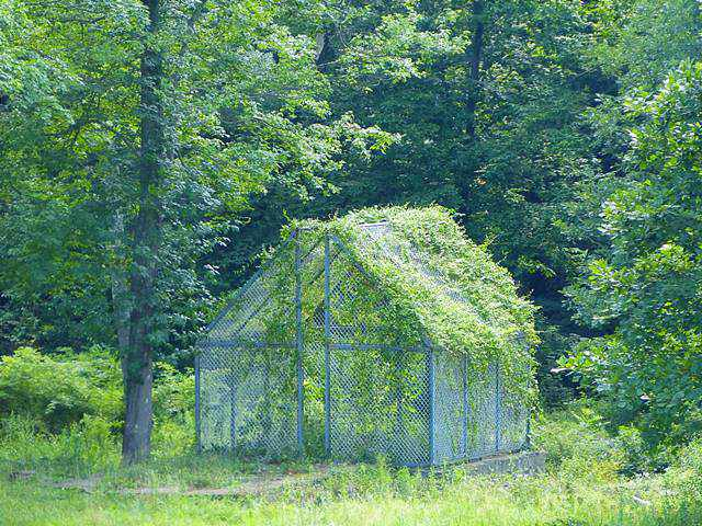The Glass House (5)