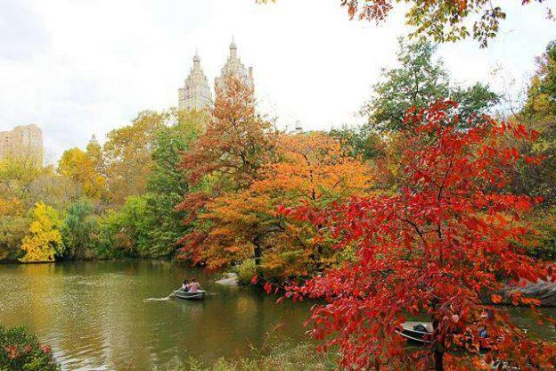 central-park-foliage-11