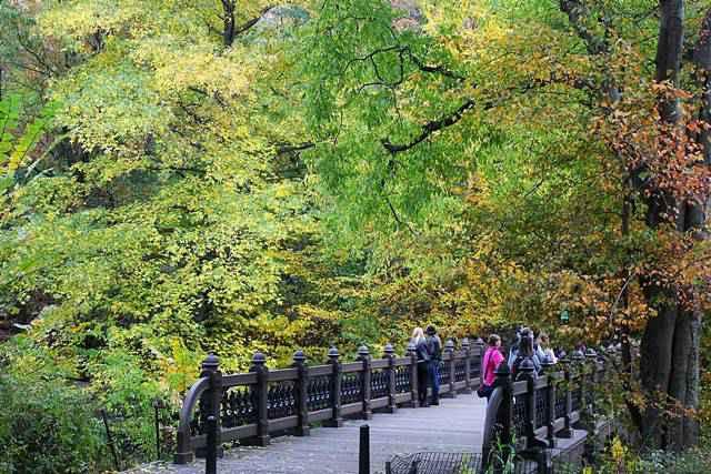 central-park-foliage-13