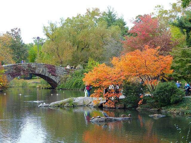central-park-foliage-3