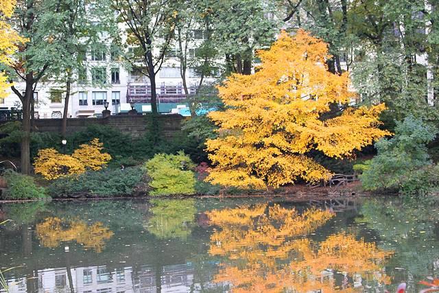 central-park-foliage-4