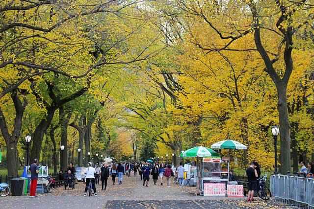 central-park-foliage-6