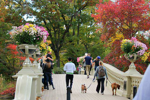 central-park-foliage-9