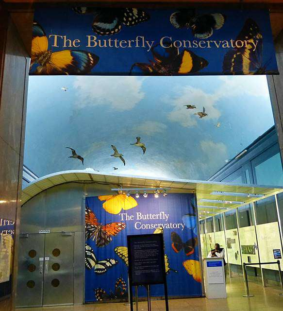 AMNH Butterfly (1)