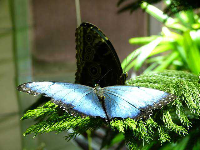 AMNH Butterfly (4)