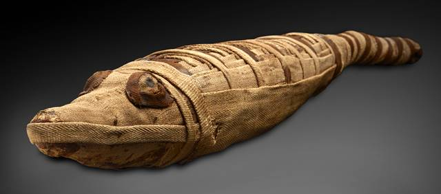 AMNH Mummies (2)