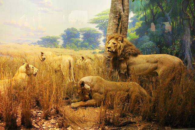 AMNH NY (37)