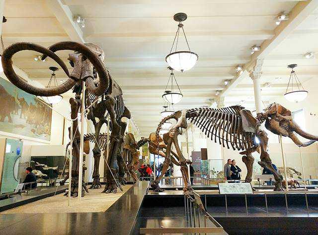 AMNH NY (7)
