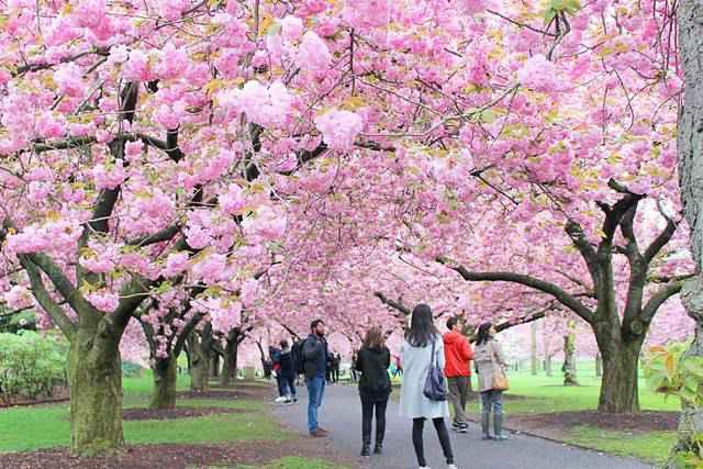 BBG Spring (2)