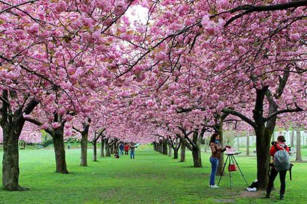 BBG Spring (5)