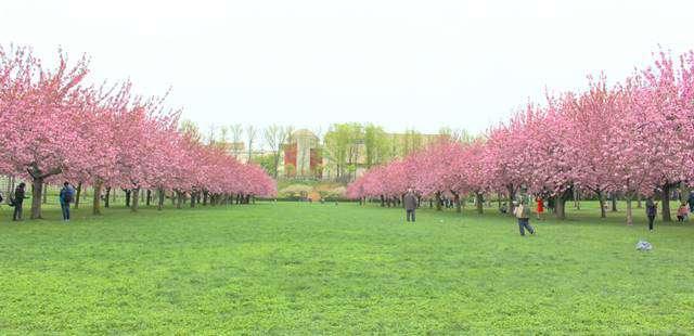 BBG Spring (7)