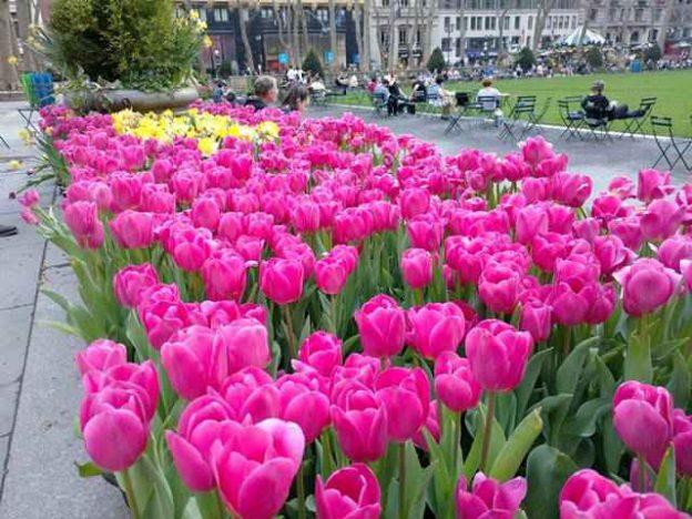 Bryant Park Spring (6)