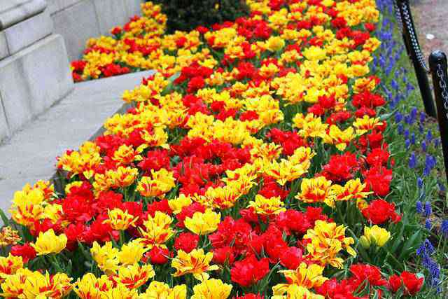 Central Park Spring (19)