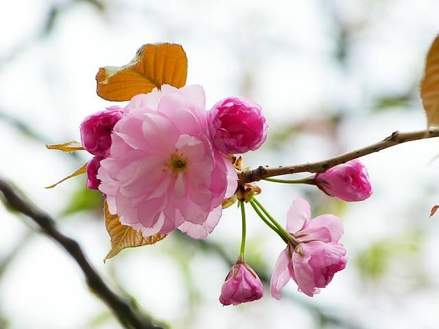 Central Park Spring (2)