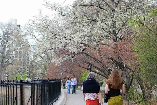 Central Park Spring (21)