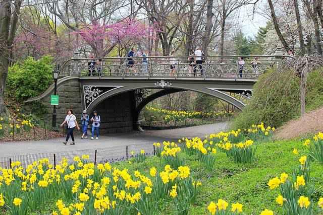 Central Park Spring (23)