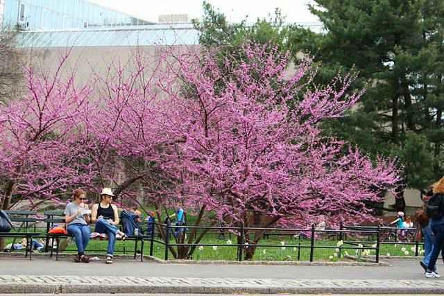 Central Park Spring (24)