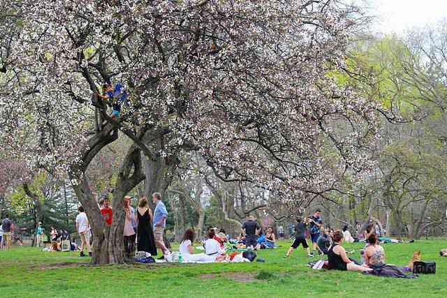 Central Park Spring (25)