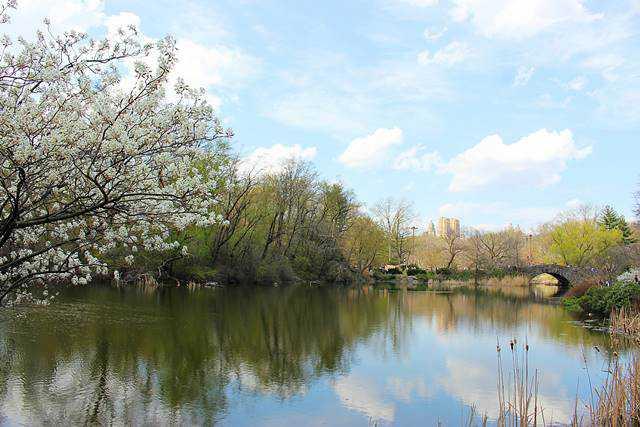 Central Park Spring (31)