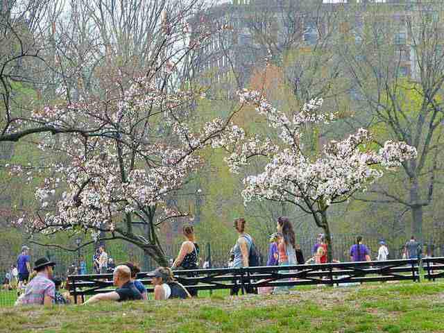 Central Park Spring (6)