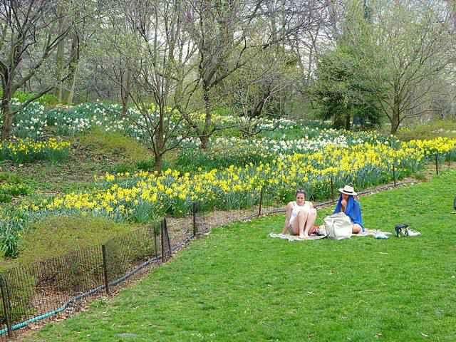 Central Park Spring (8)