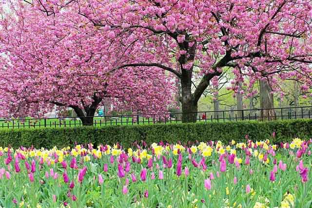 NYBG spring (1)