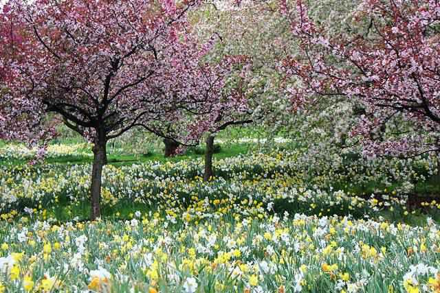 NYBG spring (5)