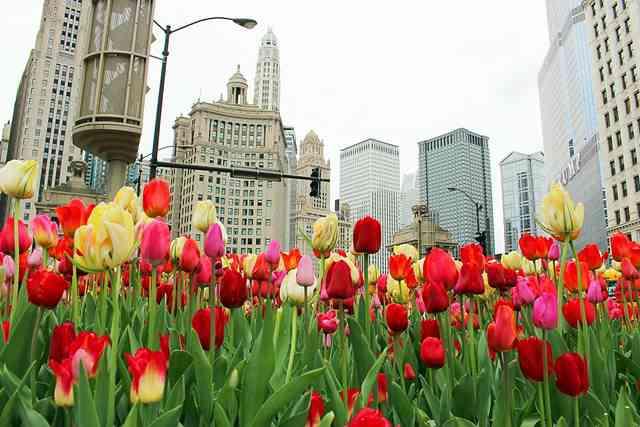 Chicago (9)